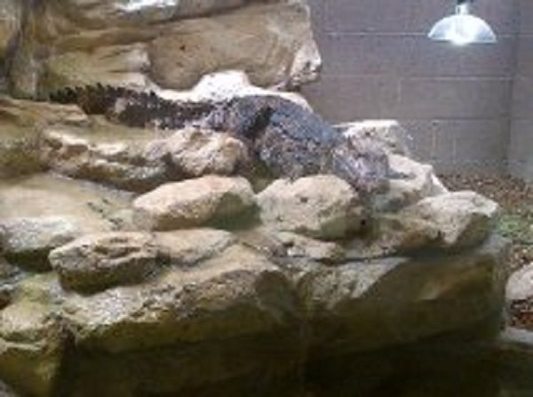 Crocodile World
